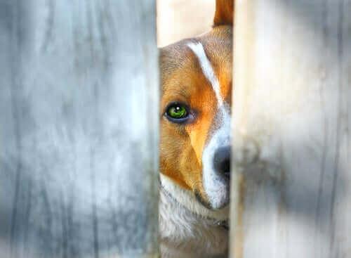 Fremskritt innen dyrs rettigheter i Colombia
