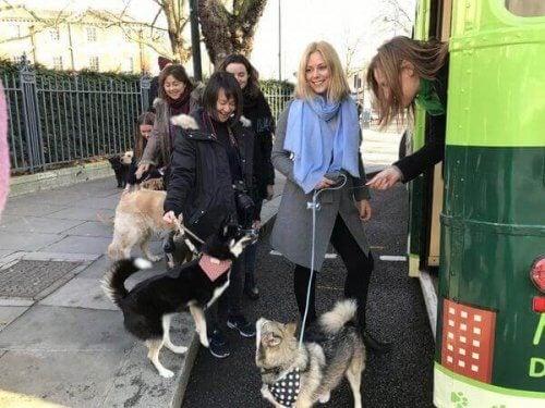 Folk som venter på bussen med hundene sine