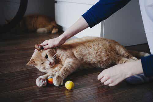 Lær hvordan du kan hjelpe dyr i grupper