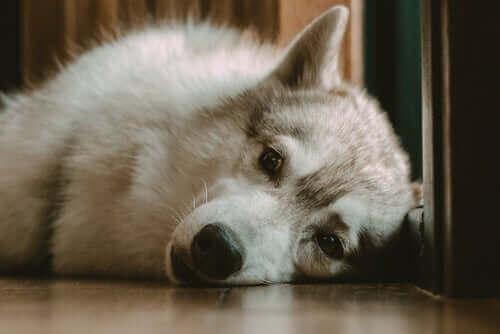 Hva gjør jeg om hunden min ikke sover om natten?