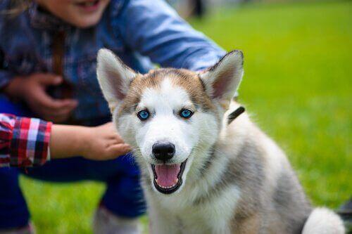 Følg disse tipsene hvis hunden din ikke stoler på deg