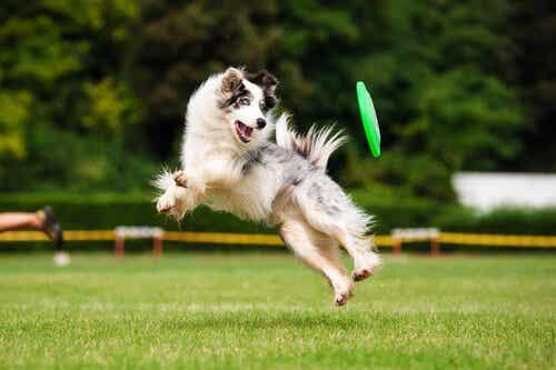 Fordelene med trening for hunden din