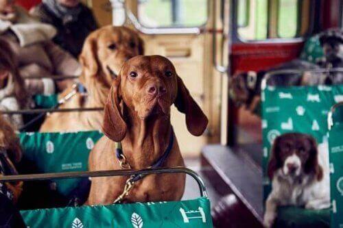 Den første turbussen for hunder i London