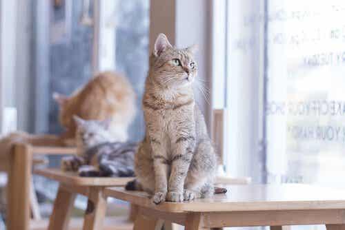 Å eie en katt kan forbedre hjertehelsen din