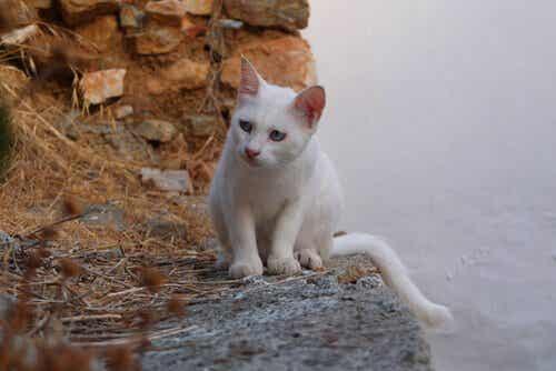 Hva representerer katter i forskjellige kulturer?