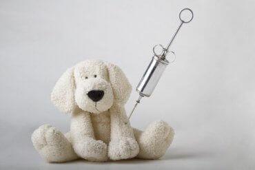 En lekehund med en injeksjonsnål - veterinær immunologi