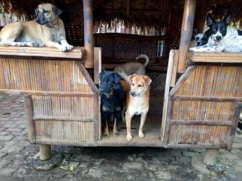 Hunder i et lite hus med halmtak
