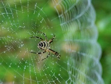 Et nærbilde av en edderkopp på edderkoppnettet