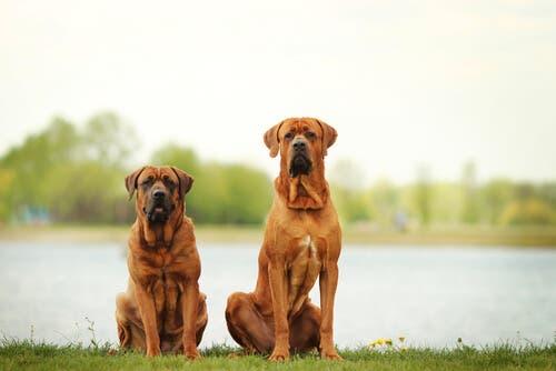 To hunder på tur