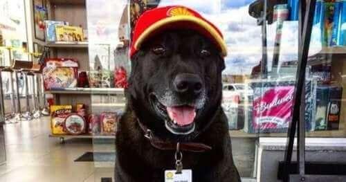 Møt Negão, bensinstasjonhunden
