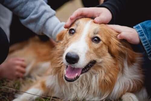 Folk klapper en lykkelig hund