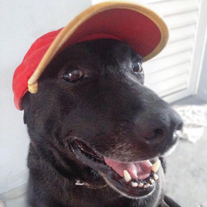Bensinstasjonhunden
