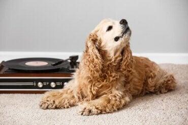 Hvordan påvirker musikk forskjellige dyr?