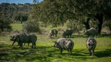 En gruppe griser i en glenning