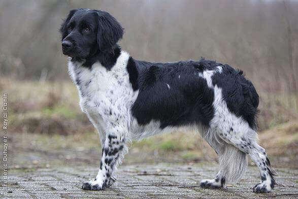 Avidog er et nettverk som hjelper hunder og eldre