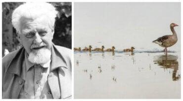 Konrad Lorenz og studiet av dyrs atferd