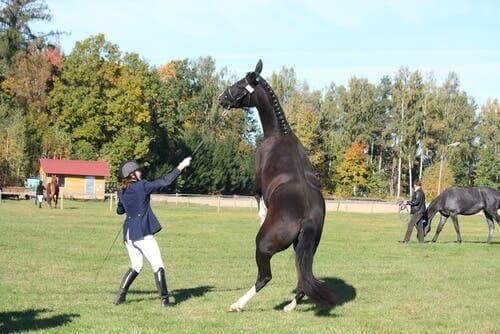 En redd hest