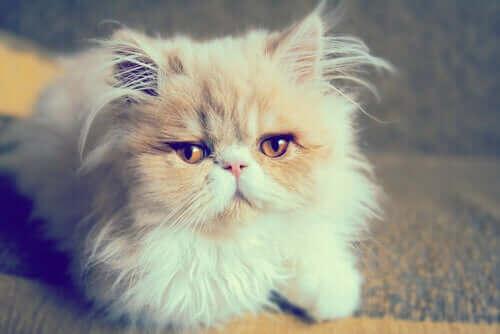 En søt katt poserer