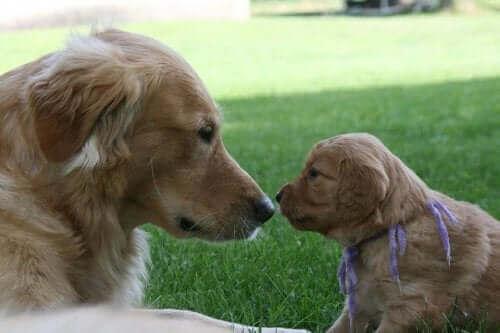 Avidog, et nytt nettverk som hjelper hunder og eldre