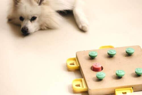 En sliten hund etter å ha spilt et spill