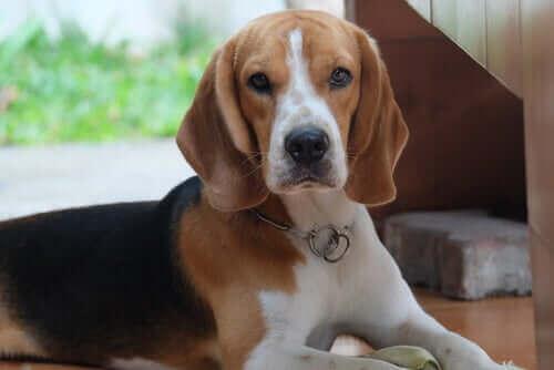 Lær alt om veterinærkonsultasjoner på nett