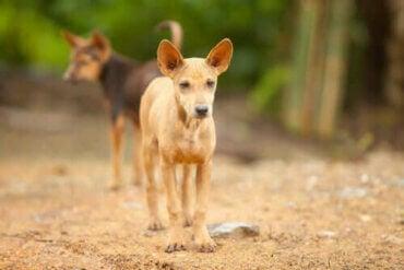 Hyllest til de forlatte hundene i Mexico