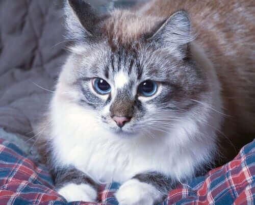 En katt som ligger på en seng.