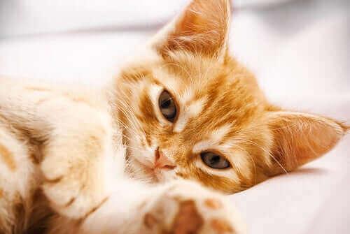 En leken kattunge som ser i kameraet