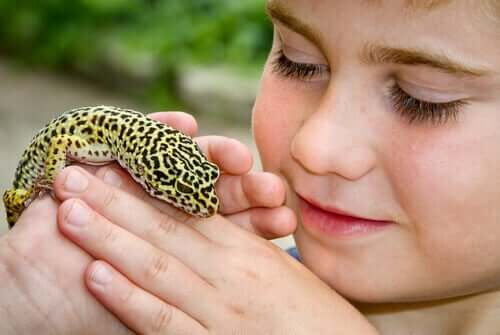 Leopardgekko er det ideelle kjæledyret