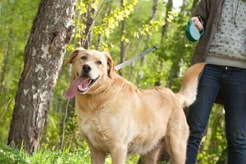 En hundeeier som lufter hunden sin