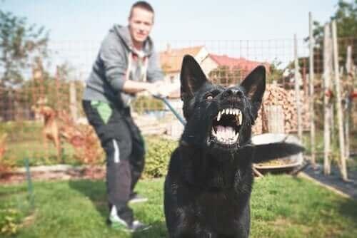 Hvordan trene en potensielt farlig hund