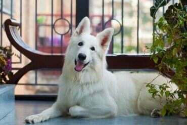Forholdsregler og sikkerhet for kjæledyr på balkong