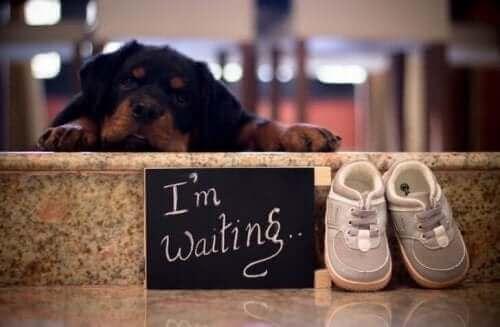 Hunder og babyer: Hvordan disse blivende foreldrene reagerte