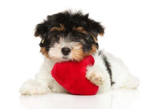 Seks tips for å ta vare på hundens hjerte