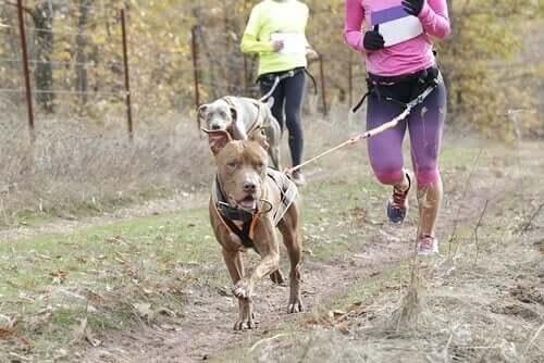 Møt hunden Leia: Mesteren i snøreløping