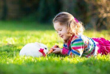 Hva består terapi med kaniner av?