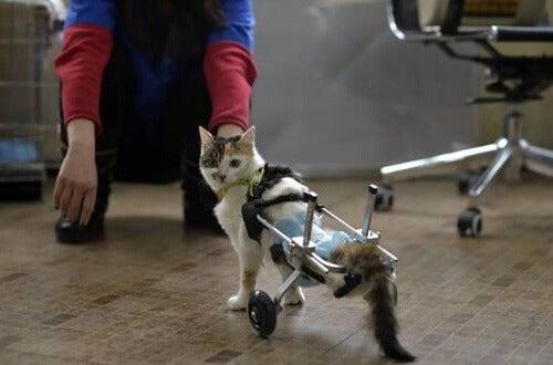 Katt med to ben