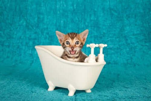En kattunge sitter i et lite badekar av plast