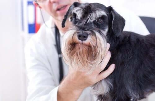Nevroterapi for hunder