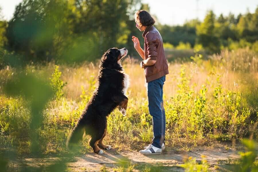 En mann og en hund i naturen