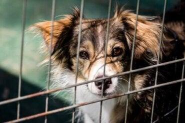 Møt en hund som samler inn penger til omplasseringssentre