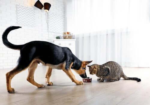 Hvordan unngå å få kjæledyret ditt til å føle seg ukomfortabel