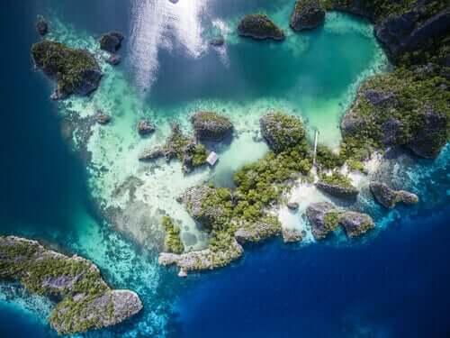 Utsikt over korallrevene og mikroskopiske alger ovenfra