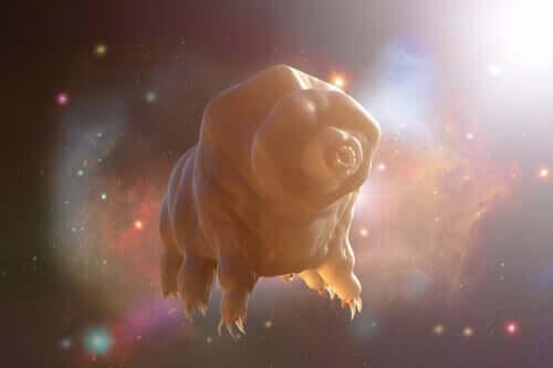 En tardigrade som flyter i rommet