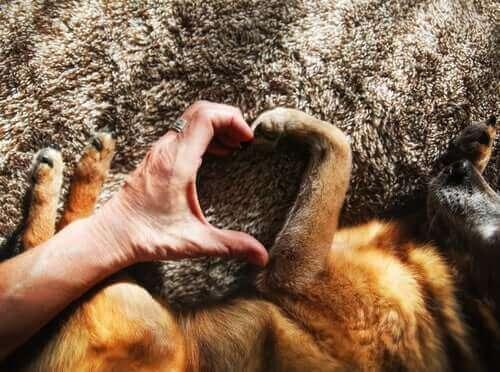 Å ha en hund er bra for hjertehelsen!