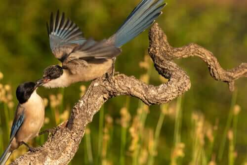 En fugl som mater en annen