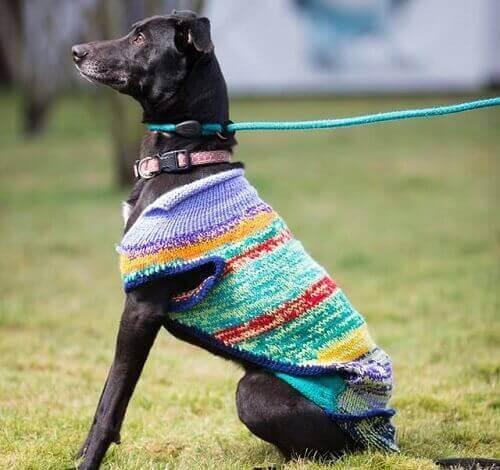 En hjemløs svart hund iført genser.