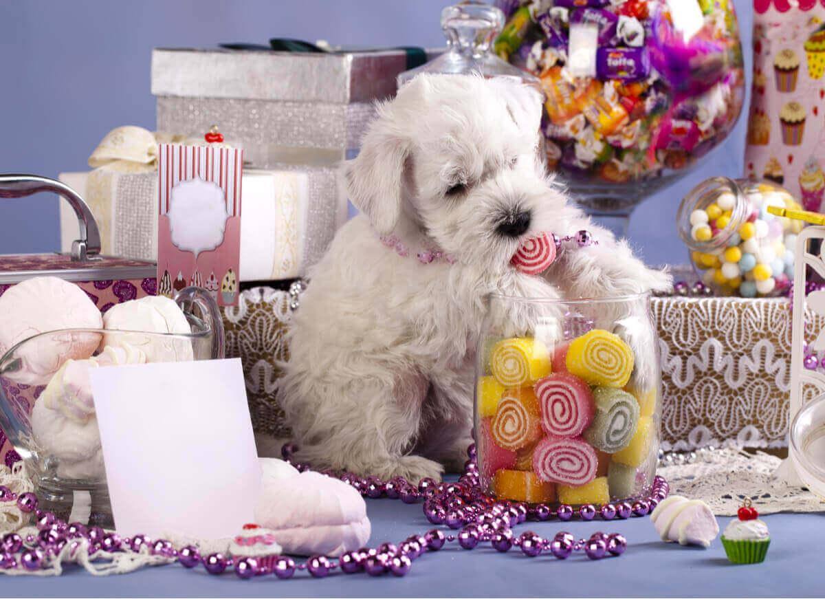 En hund omgitt av godteri