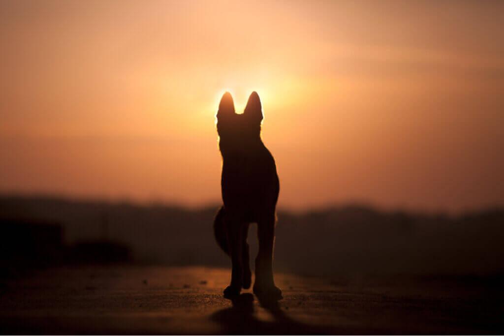 Kan hunder forstå døden?