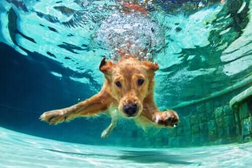Alt du trenger å vite om svømming for hunder